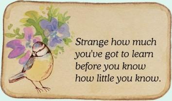 Bird-flower + quote